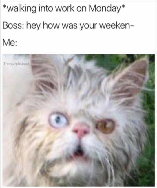 monday cat memes - Cat - walking into work on Monday* Boss: hey how was your weeken- Me: The purple.sock
