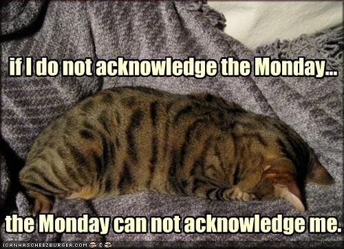 monday cat memes - Mammal - ifldo not acknowledge the Monday the Monday can notacknowledge me ICANHASCHEEZBURGER.OOM