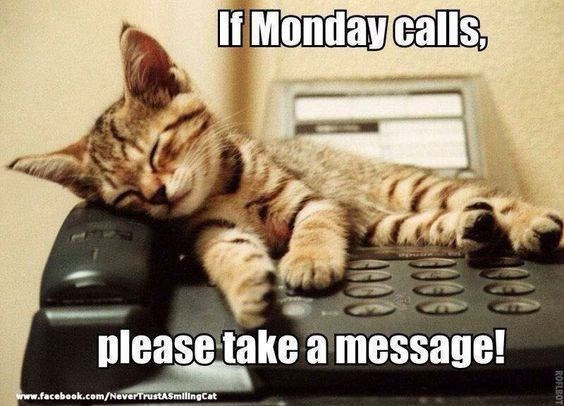 monday cat memes - Cat - If Monday calls, please take a message! www.facebook.com/NeverTrustASmilingCat ROFLBOT