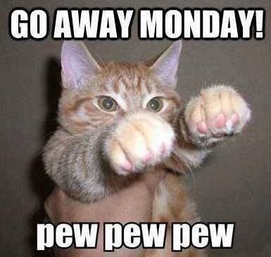 monday cat memes - Cat - GO AWAY MONDAY! pew pew pew