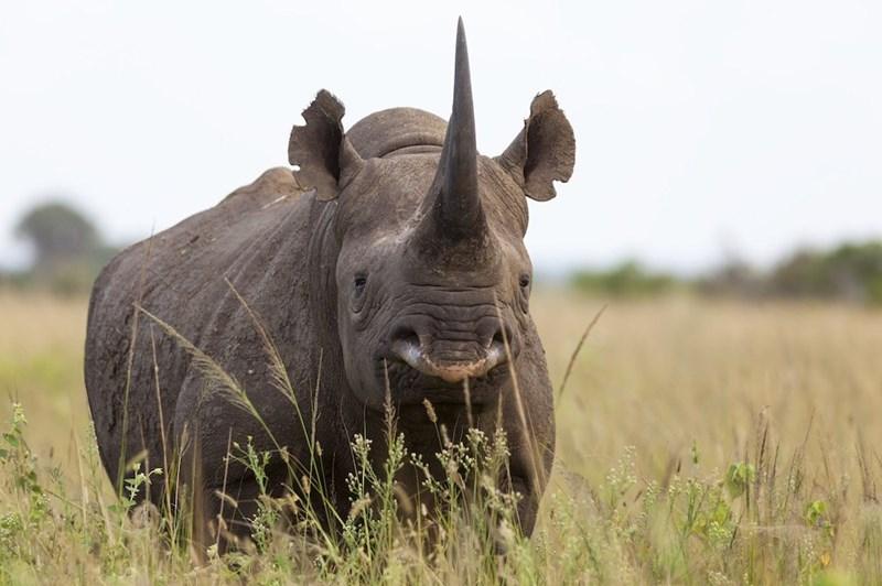 Big rhinoceros in an open field