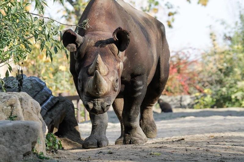 Rhinoceros on concrete