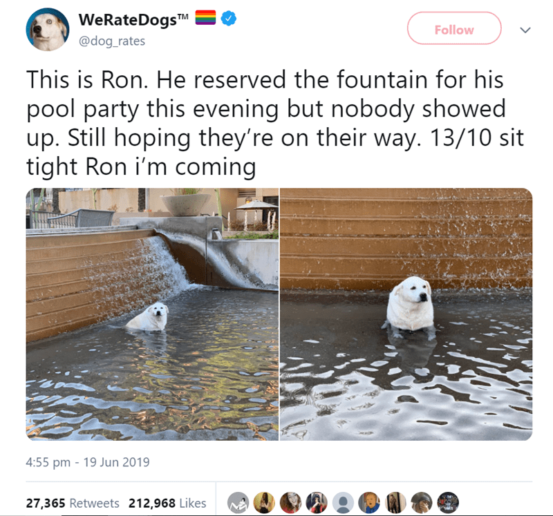 Text - WeRate DogsTM Follow @dog_rates This is Ron. He reserved the fountain for his pool party this evening but nobody showed up. Still hoping they're on their way. 13/10 sit tight Ron i'm coming 4:55 pm 19 Jun 2019 27,365 Retweets 212,968 Likes 1