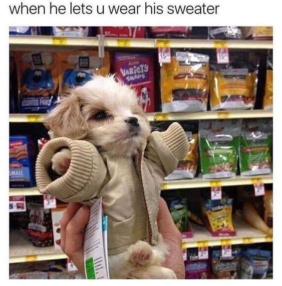 Dog - when he lets u wear his sweater 15 Po VARICTS SNAPS RTED PANS