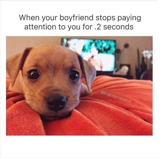 Dog - When your boyfriend stops paying attention to you for .2 seconds @bigkidproblems