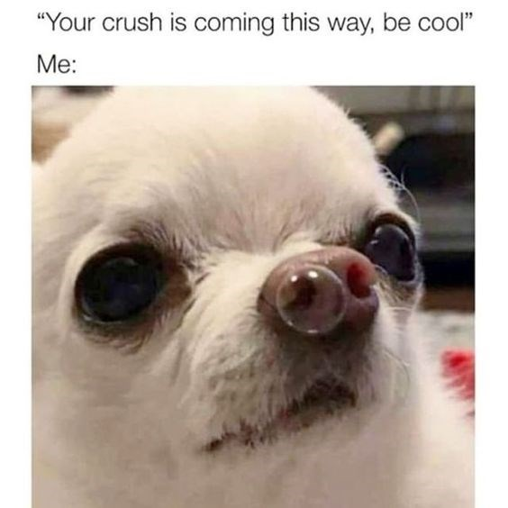 "Mammal - ""Your crush is coming this way, be cool"" Me:"