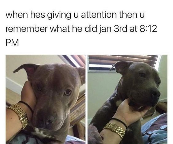 Dog - when hes givingu attention then u remember what he did jan 3rd at 8:12 PM