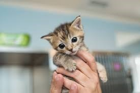 tabby kitten being held by someone's hand