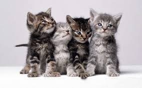 four grey and black kittens sitting in a row