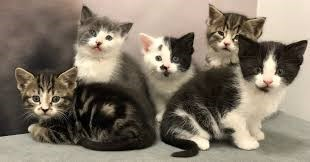five grey black and white kittens sitting together