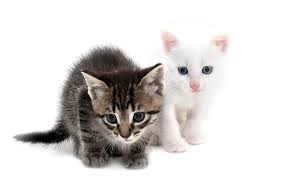 tabby brown and a white kitten sitting together looking at something