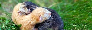 two young kittens sleeping on each other in the grass