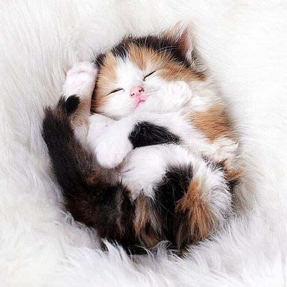 brown, black, orange and white kitten curled on its back sleeping