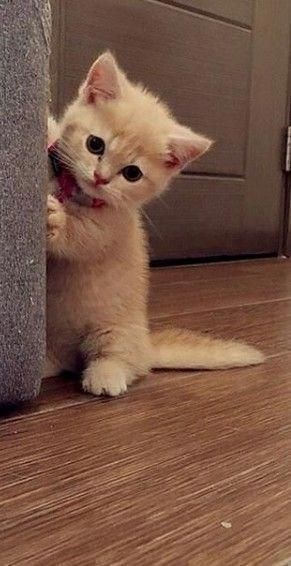 ginger kitten standing on its hind legs against a wall