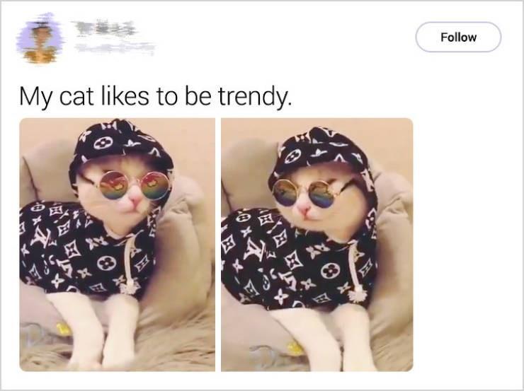 cute cat - Eyewear - **** Follow My cat likes to be trendy.