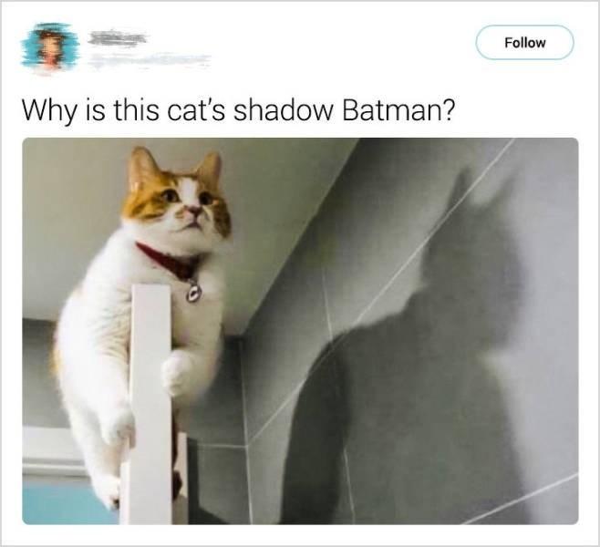 cute cat - Cat - Follow Why is this cat's shadow Batman?