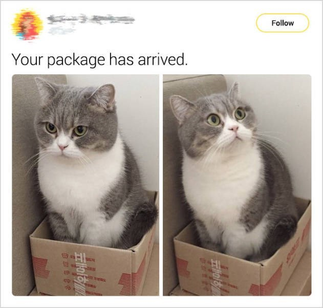 cute cat - Cat - Follow Your package has arrived. co 91에프