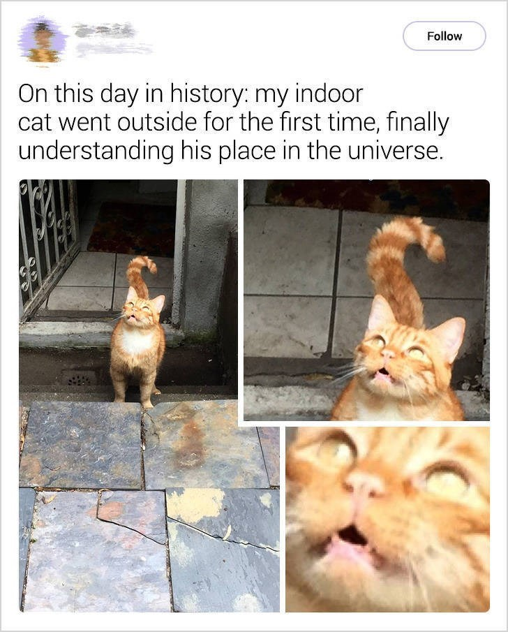 cute cat - Text - Follow On this day in history: my indoor cat went outside for the first time, finally understanding his place in the universe.