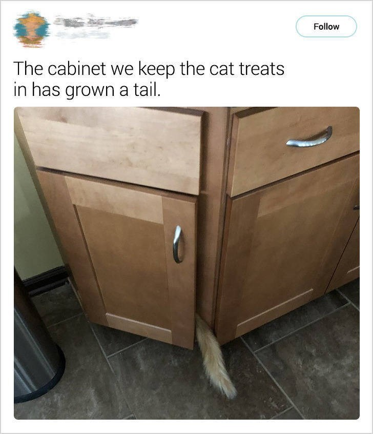 cute cat - Drawer - Follow The cabinet we keep the cat treats in has grown a tail.