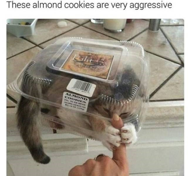 Human - These almond cookies are very aggressive klit ALMOND COORIES