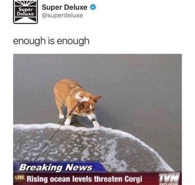 Canidae - Super Super Deluxe Deluxe @superdeluxe enough is enough Breaking News LIVE Rising ocean levels threaten Corgi EYCUSVE
