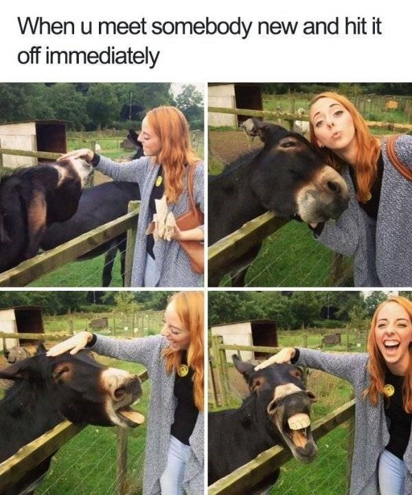 Horse - When u meet somebody new and hit it off immediately