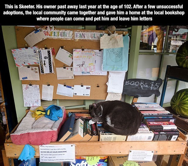 wholesome meme - Room - This is Skeeter. His owner past away last year at the age of 102. After a few unsuccessful adoptions, the local community came together and gave him a home at the local bookshop where people can come and pet him and leave him letters BKEETER ELCO TEW 7e ANE A+ HARDON Y BOOKS $5 REllroy ET Heomy name is Sometimest can be a bit orank so PAT ME AT voUR OWN RISK My oaner l passed aw on ACK EA 14Ady, aged so So now bon to the whole commny ondo TRA VA 10