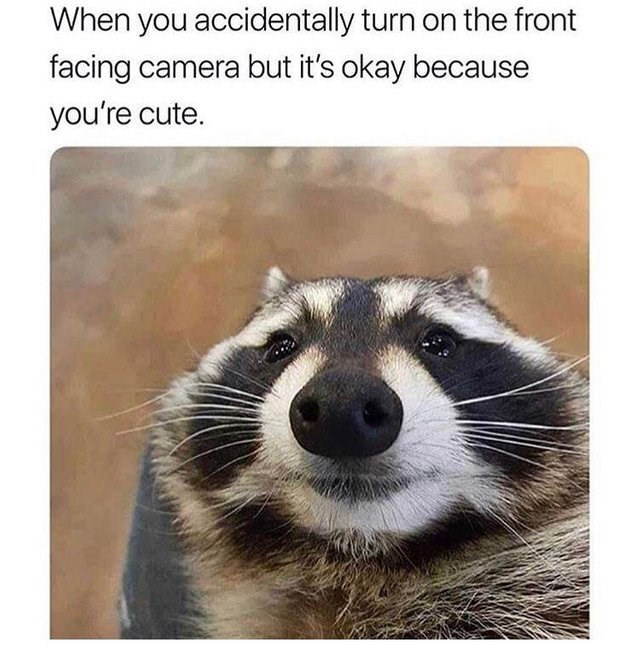wholesome meme - Mammal - When you accidentally turn on the front facing camera but it's okay because you're cute.