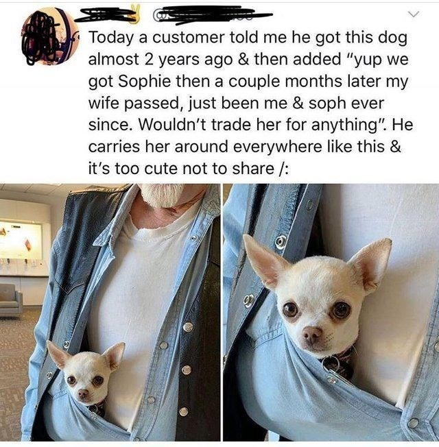 "wholesome meme - Mammal - CUN Today a customer told me he got this dog almost 2 years ago & then added ""yup we got Sophie then a couple months later my wife passed, just been me & soph ever since. Wouldn't trade her for anything"". He carries her around everywhere like this & it's too cute not to share /:"
