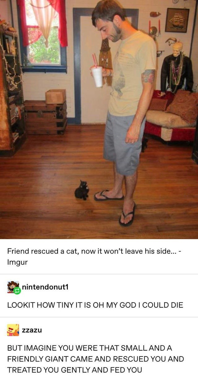 wholesome meme - Floor - Friend rescued a cat, now it won't leave his side... - Imgur nintendonut1 LOOKIT HOW TINY IT IS OH MY GOD I COULD DIE Zzazu BUT IMAGINE YOU WERE THAT SMALL AND A FRIENDLY GIANT CAME AND RESCUED YOU AND TREATED YOU GENTLY AND FED YOU