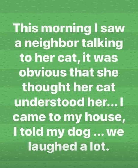 dogs pets talking story Cats funny - 9322798336