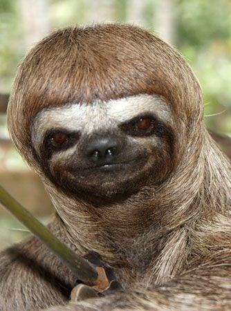 funny sloth - Mammal