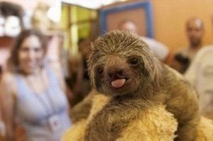 funny sloth - Canidae