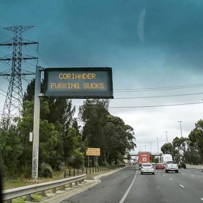 Road - CORIANDER ING SUCKS 50 kn/ coles OKe