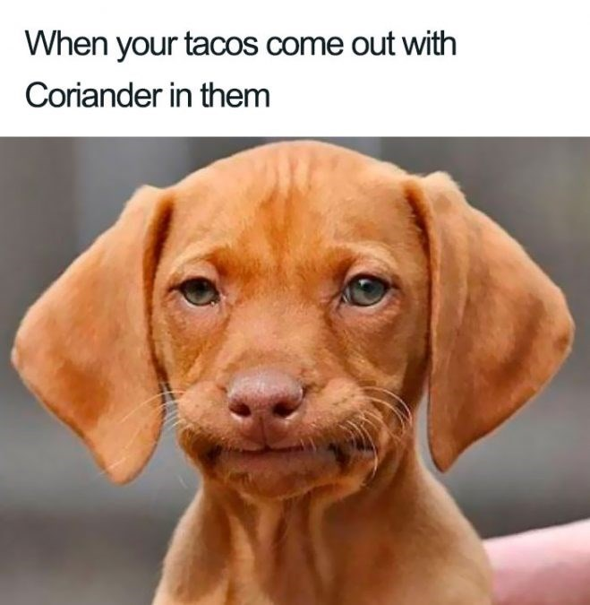 Dog - When your tacos come out with Coriander in them
