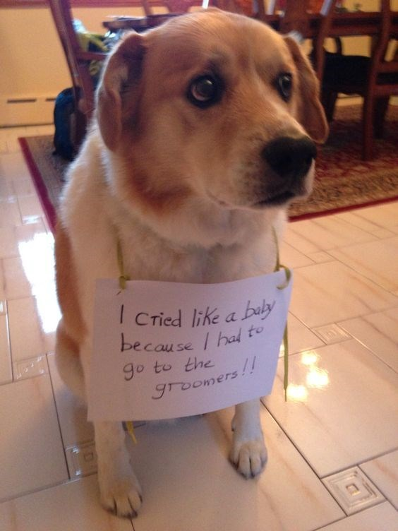 dog shamed for crying