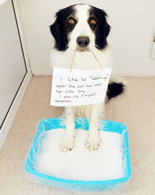"""guilty dog - Dog - to """"clean up ike aster the cat has used her Litter tray also use it my self Sometimes."""