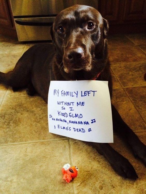 guilty dog - Dog - M FAMILY LEFT WITHOUT ME So T KIUED ELMO A NA NA NA, NANA NANA ELMOS DEAD