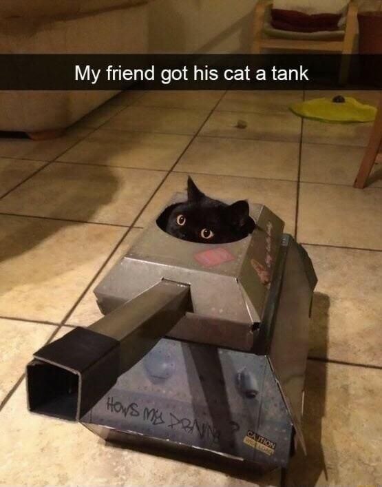 funny pic - Cat - My friend got his cat a tank CA TION WLA LOAD HOWS MDRNN