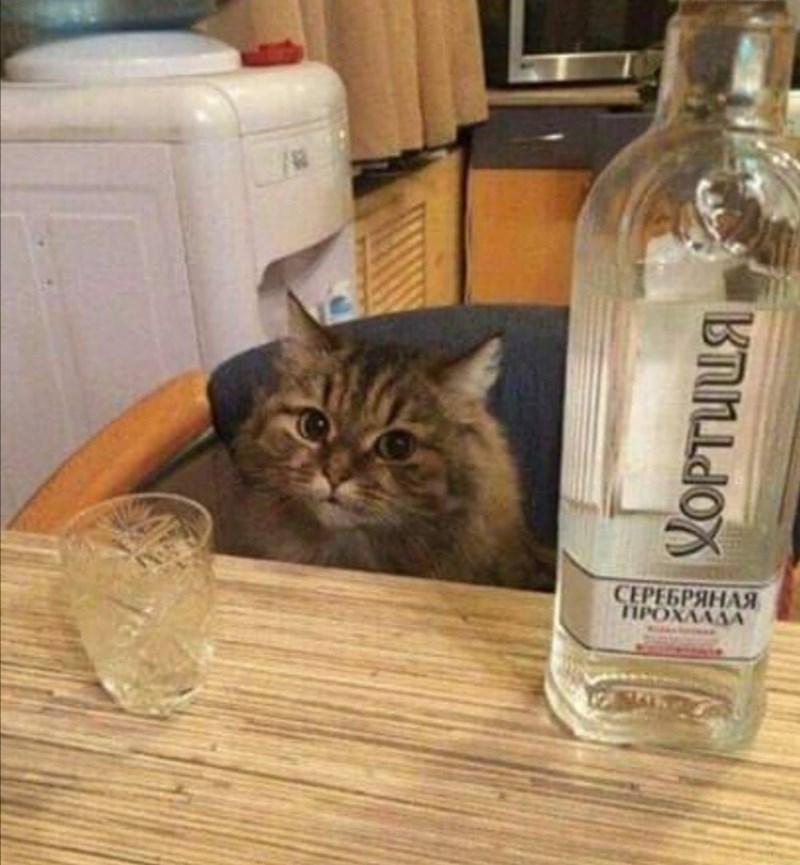 slav weirdness - Cat - SEPESPAHA YOPTULA
