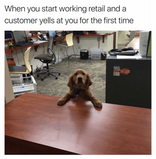 Meme - Dog - When you start working retail and a customer yells at you for the first time Rer