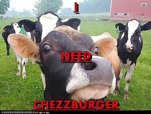 Cheezburger Image 9323088640