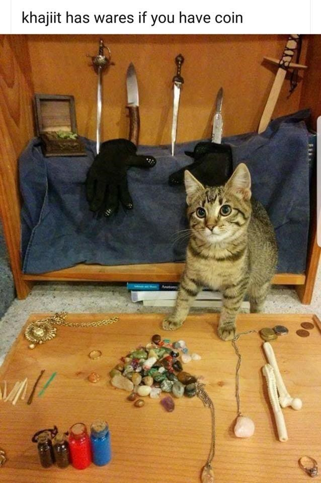 Meme - Cat - khajiit has wares if you have coin An