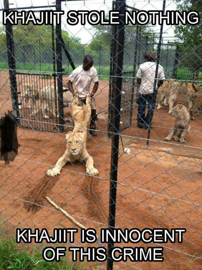 Meme - Felidae - KHAJIIT STOLE NOTHING KHAJIIT IS INNOCENT OF THIS CRIME