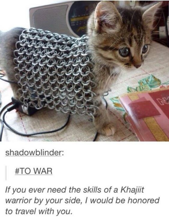 Meme - Cat - N shadowblinder: #TO WAR If you ever need the skills of a Khajiit warrior by your side, I would be honored to travel with you.