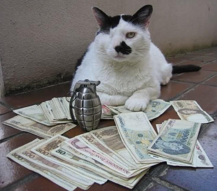 Meme - Cat - ds G00 VAR 50 500 600 BOO el MAROD AK sKE 000 600
