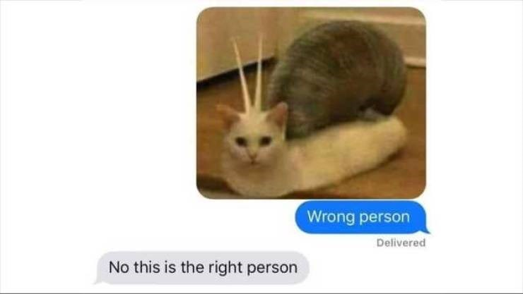 Meme - Cat - Wrong person Delivered No this is the right person