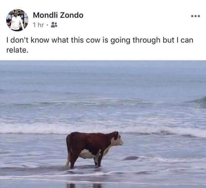 depression meme - Text - Mondli Zondo 1 hr Idon't know what this cow is going through but I can relate.