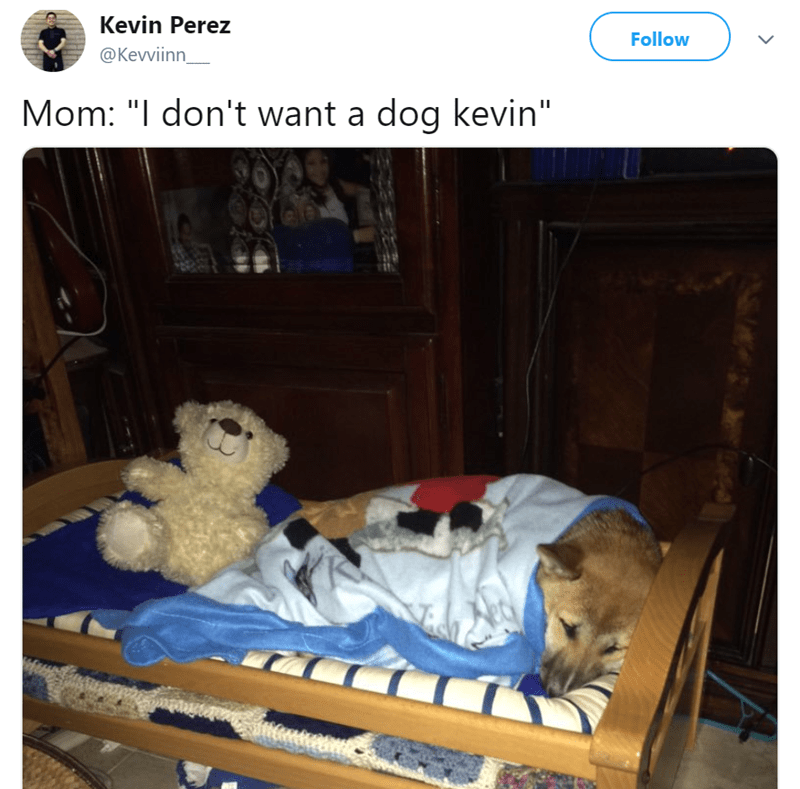 "mom's dog - Furniture - Kevin Perez Follow @Kevviinn Mom: ""I don't want a dog kevin"""