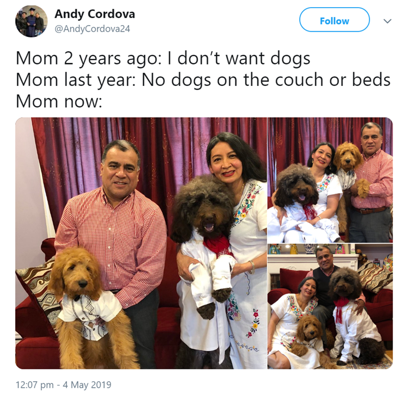 mom's dog - Adaptation - Andy Cordova Follow @AndyCordova24 Mom 2 years ago: I don't want dogs Mom last year: No dogs on the couch or beds Mom now: 12:07 pm 4 May 2019 Wwwwwd